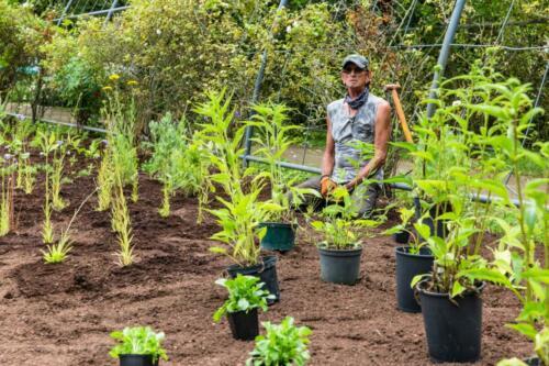 Pflanzarbeiten vom Schlockerhof